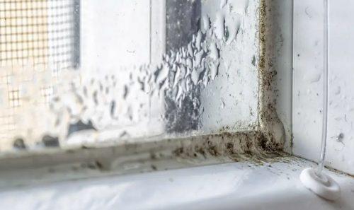 Pelėsio namuose problemas – su ja susiduria praktiškai visi